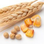 Grain futures mixed, wheat trades in proximity to 19-month low