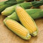 Grain futures edge lower on yields outlook