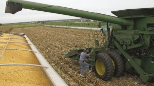 Grains trading outlook: corn, soybeans and wheat futures turn red after rally