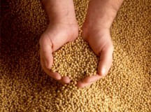 Soybeans Advance Following Increased Demand in China