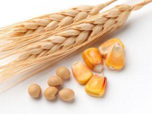 corn__wheat___soybeans