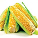 Corn Futures Daily Trading Forecast