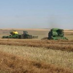 Grains trading outlook: wheat, corn, beans prices decline after US crop report