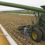 Grains trading outlook: corn, soybeans and wheat futures rebound