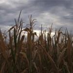 Grain futures fall following USDA report