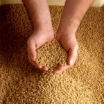 Grain futures mixed, soybeans reverse six days of gains